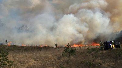 Chobham Common nature reserve fire
