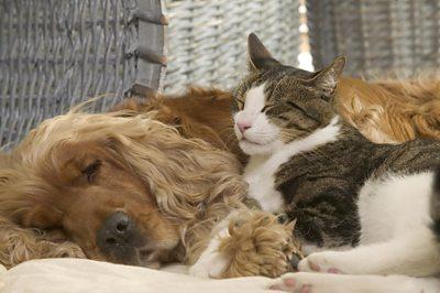 Dog and cat cuddled up