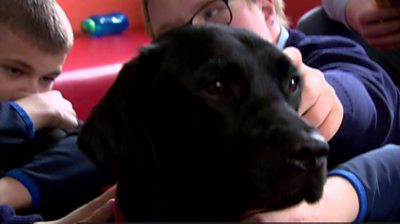The therapy dog making friends at a Belfast school