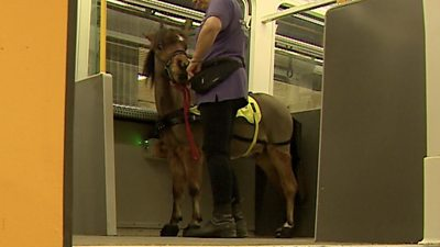 The UK's first ever guide horse has added another skill to his CV: Travelling on trains.