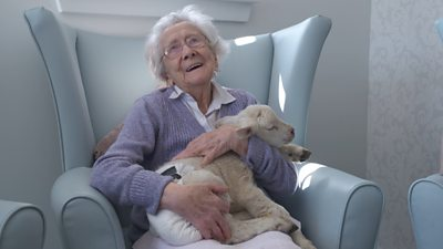 Aberdeenshire orphan lambs helping with dementia