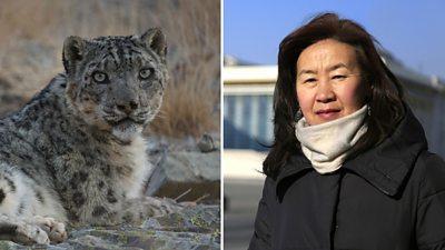 Snow leopard and Bayarjargal Agvaantseren