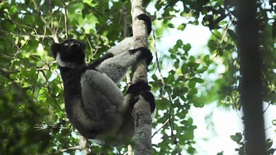 saving Madagascar's forest