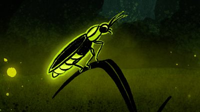 Illustration of a firefly