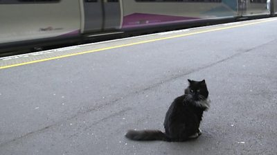 Felix the cat at the station
