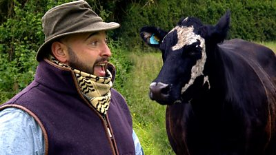 Alfonso sings to cow