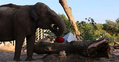 kate the elephant