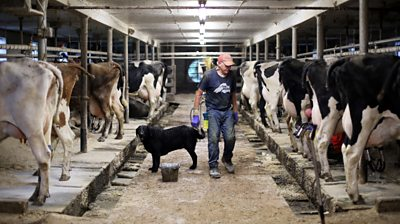 Roger Voelker at the family's dairy farm.