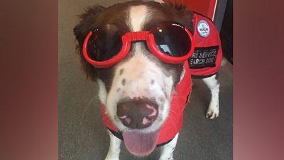 Rescue dog Max