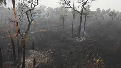 Burned trees are seen in this still