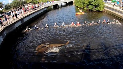 The 14-person strong wall encouraged the dolphins to sea after being stranded in a canal in Florida for days.
