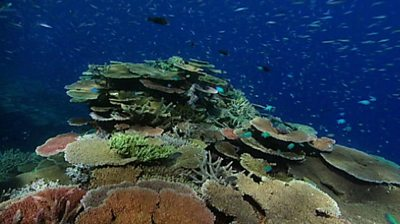 fish and coral of the Great Barrier Reef