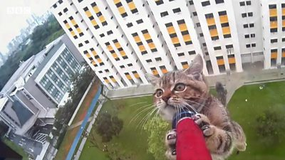 cat being rescued