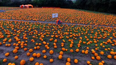 James Maxey in field of pumpkins