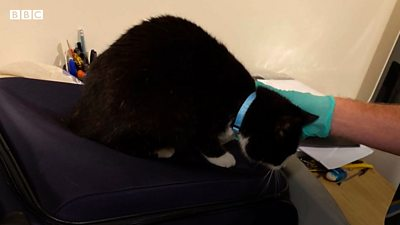 Stowaway cat sneaks into hand luggage
