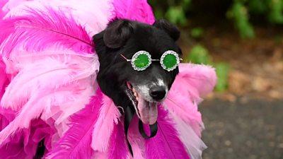 Dog dressed as Rihanna