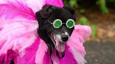 Dog dressed a Rihanna