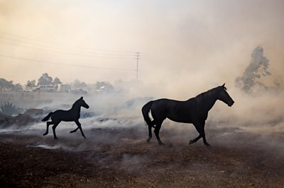 Horses in fire