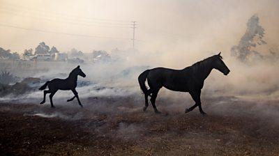 Horses in smoke