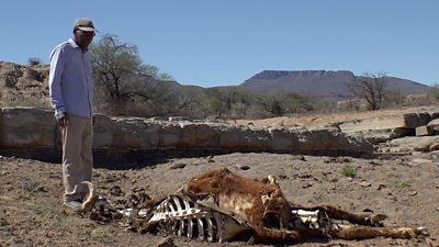 Farmer with dead cattle