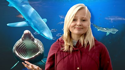 Robyn Montague and various marine life