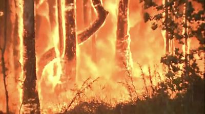 Trees burning in Australia