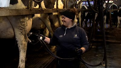 Margaret Little milking cows in a parlour