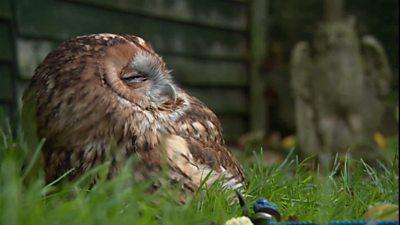 Rita has been rescuing birds of prey for over 40 years