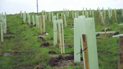 trees-planted-in-soil