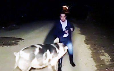 Pig storms Greek TV broadcast
