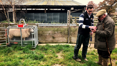 Will Roobottom weighing sheep with granddad Graham