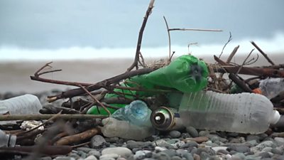Plastic waste on the shore
