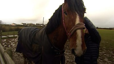 A shire horse from a Pembrokeshire farm is the second to be sold to the Household Cavalry.