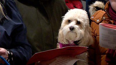 Dog at carol concert