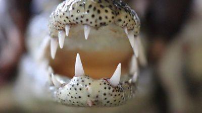 crocodile's mouth with sharp teeth