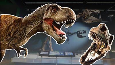 Scotty the T. rex
