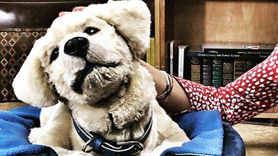 Jennie, the robo dog