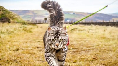Meet the cat that loves being walked around the Yorkshire countryside