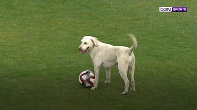 dog and football