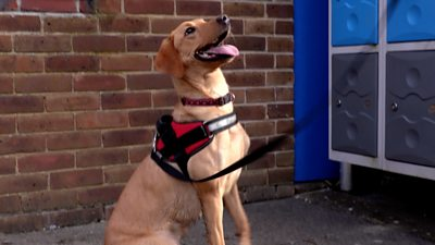 Concern over county lines drug gangs leads schools in Hampshire to pay for sniffer dogs to visit.