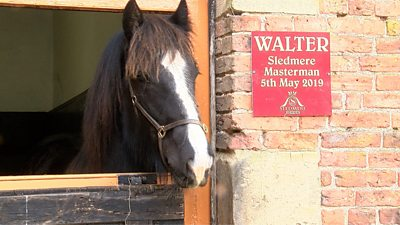 Walter was the first shire foal born at Sledmere