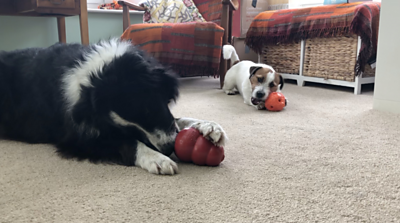 dogs exercising