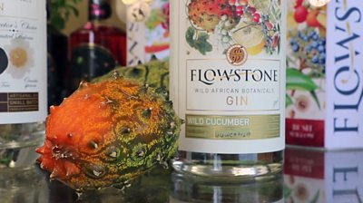 Flowstone gin bottle and wild cucumber