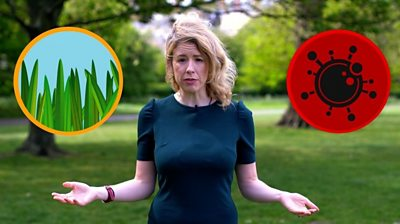 Laura Foster and hay fever and coronavirus symbols