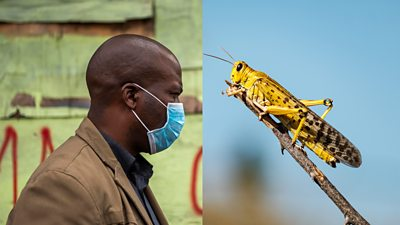 Man wearing a face mask and a locust