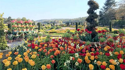 More than 200,000 bulbs have bloomed at Trentham Gardens