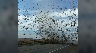 Driver encounters dust devil of tumbleweeds