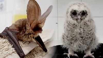 A bat and an owl