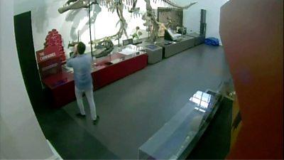 Night at the museum: Man breaks into dinosaur exhibit, taking selfies