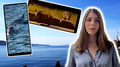BBC Monitoring's Turkish media specialist Beril Akman